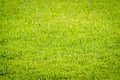 Green grass texture from a field Royalty Free Stock Image