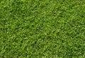 Green grass texture. Green lawn soccer field background