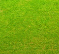 Green grass texture nature background Stock Images