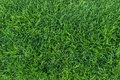 Green grass texture on top view Royalty Free Stock Photo