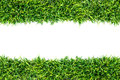 Green grass texture white background Royalty Free Stock Images