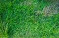 Green grass.top veiw Royalty Free Stock Photo