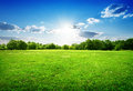 Green grass and trees Royalty Free Stock Photo