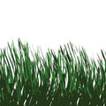 Green Grass Vector Royalty Free Stock Photos