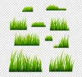 Green grass vector illustration isolated. Summer natural grassy green plant for garden. Grass template