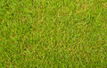 Green grass view from above Stock Photography