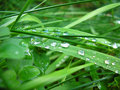 Green grass with water drops Stock Images