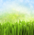 Green Grass with Water Drops on Abstract Royalty Free Stock Photo
