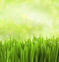 Green Grass With Water Drops /...