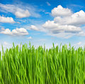 Green grass with water drops over blue sky Royalty Free Stock Photo
