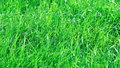 Green grass wavers in the wind Stock Photos