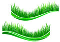 Green grass waves isolated on white background Stock Image