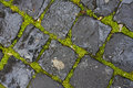 Green grass between wet cobblestones Royalty Free Stock Photo