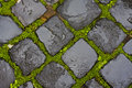 Green grass between wet cobblestones Stock Photo