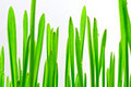 Green grass on white background Royalty Free Stock Photos