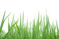 Green grass on the white background Royalty Free Stock Photography