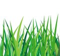 Green grass on a white background illustration Stock Photo