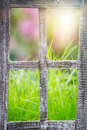Green grass at the window Royalty Free Stock Photo