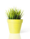 Green grass in a yellow flower pot isolated on white background Stock Photo
