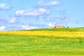 Green grass and yellow flowers field landscape under blue sky and clouds Royalty Free Stock Photo