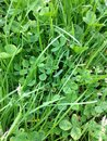 Green grasses spring fresh in the morning Stock Photos