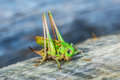 Green grasshopper sits on wooden bench in summer city park Royalty Free Stock Photos