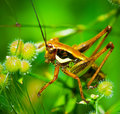 Green grasshopper sitting on leaf in the middle of the grass Royalty Free Stock Photo