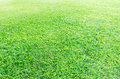Green grassland Royalty Free Stock Photography