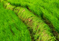 Green grassland and road Stock Images
