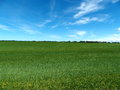 Green grassy farm field open flat Stock Photography