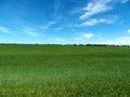 Green grassy farm field Royalty Free Stock Photo