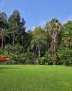 The green grassy lawn in an exotic park Stock Images