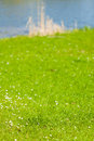 Green grassy shore of the lake or river Royalty Free Stock Photo