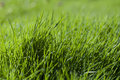 Green green grass 2 Stock Photography