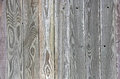 Green grey tinted wood fence background board uniq boards show unique grain knots Royalty Free Stock Image
