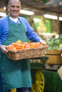 Green grocer with basket of peppers smiling portrait Stock Images