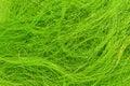 Green hair Royalty Free Stock Photo