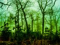 Green Haze and Tree Silhouettes Royalty Free Stock Photo