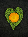 Green heart on cracked soil Stock Images