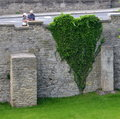 Green heart of creeper in park Stock Photo