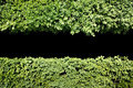 Green hedge background with central black copy space Royalty Free Stock Photo