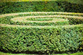 Green hedge labyrinth in french garden horizontal shot Royalty Free Stock Image