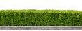 Green hedge Royalty Free Stock Photo