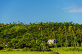 Green Hill with Palm Trees in San Andres, Colombia Stock Photos