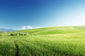 Green hills in sunny day tuscany italy Royalty Free Stock Photos