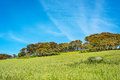 Green hillside under a blue sky Royalty Free Stock Photo