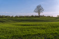 Green hilly field with lonely tree on horizon and blue sky photo taken may Royalty Free Stock Images