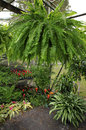 Green house with ferns bromeliads corn plant palms and ivy a small various plants to include Royalty Free Stock Images