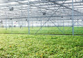 Green house interior Royalty Free Stock Photos