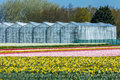 Green houses in a cultivated flower field Royalty Free Stock Photo